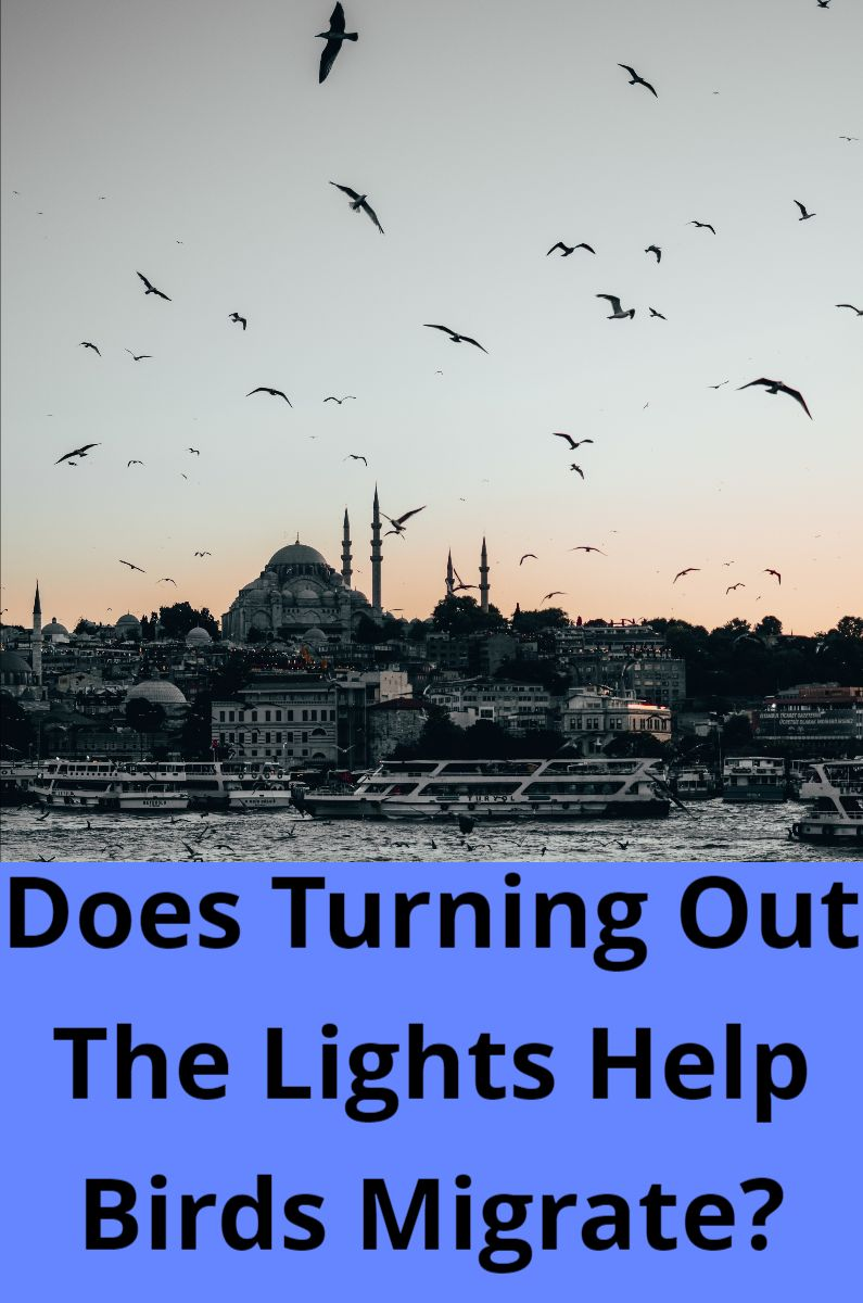 Does Turning Out The Lights Help Birds Migrate?