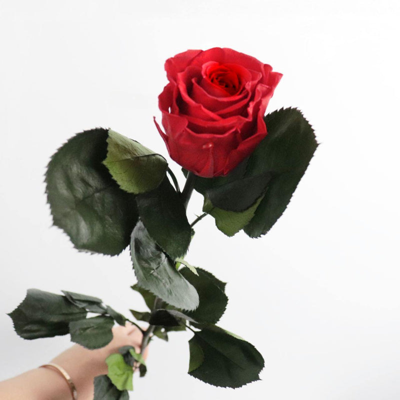 Preserved Rose - Classic Red |  Single Stem