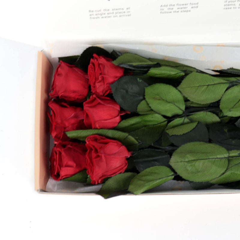 Premium Everlasting Rose Bouquet - 6 Stems