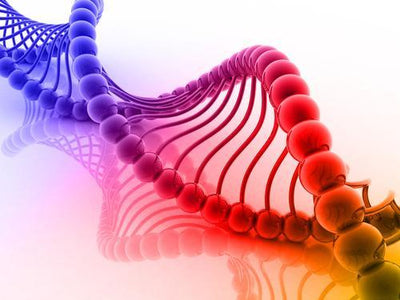 Genetic Testing & Breast Cancer