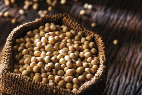 Do Soybeans Cause Breast Cancer?