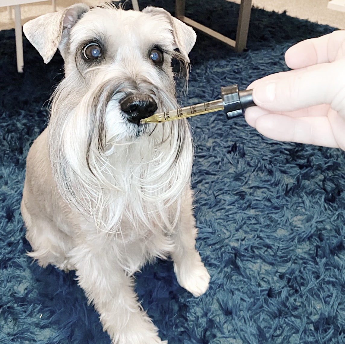 cbd-oil-for-dogs-2
