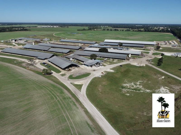 overhead shot of Alliance Dairies