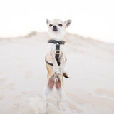 Leka Carbon Strap Dog Harness
