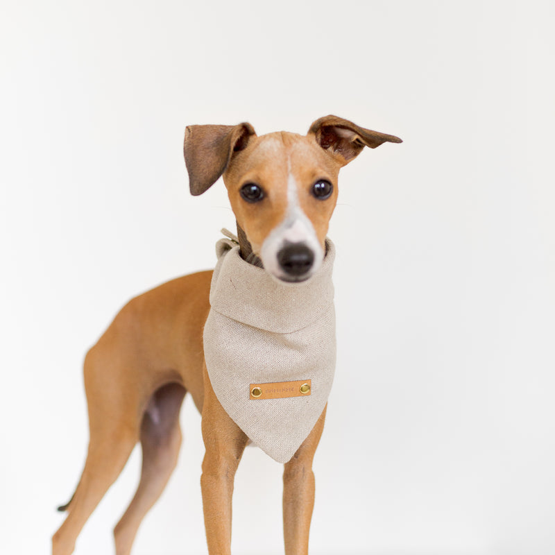 Signature Organic Hemp Dog Bandana