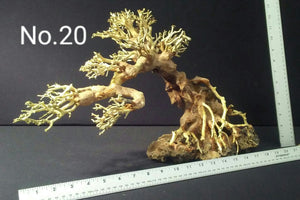"Large Bonsai | 17.5"" x 11.5"" 