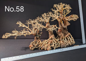 "Jumbo Bonsai | 31.5"" x 15.5"" 
