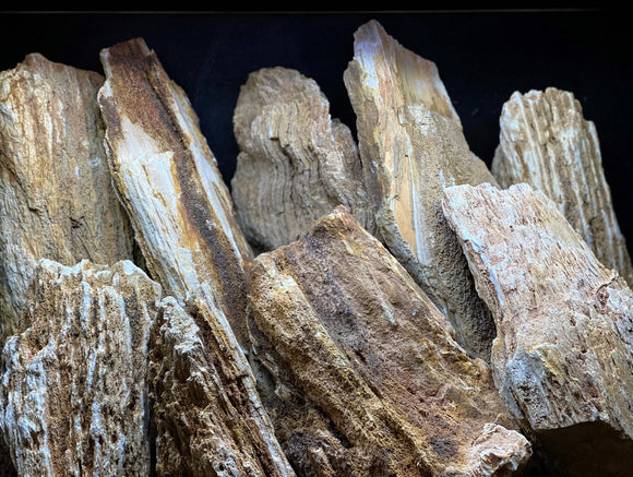 Red Wood Fossil Stone | Assorted Bulk