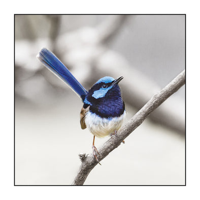 Myrtle & Me - Blue Wren Greeting Card - Raw Cottage