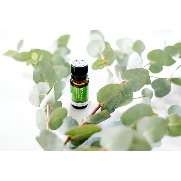 ECO Aroma - Eucalyptus Pure Essential Oil - 10ml - Raw Cottage