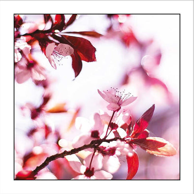 Myrtle & Me – Spring Blossom - Pink Greeting Card - Raw Cottage