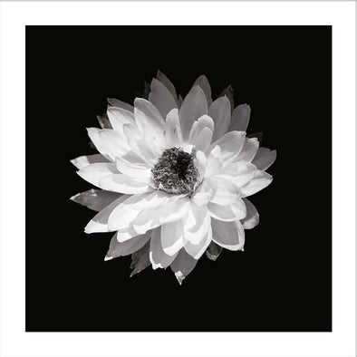 Myrtle & Me – Everlasting Daisy Greeting Card - Raw Cottage