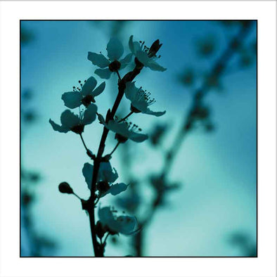 Myrtle & Me – Spring Blossom - Blue Greeting Card - Raw Cottage