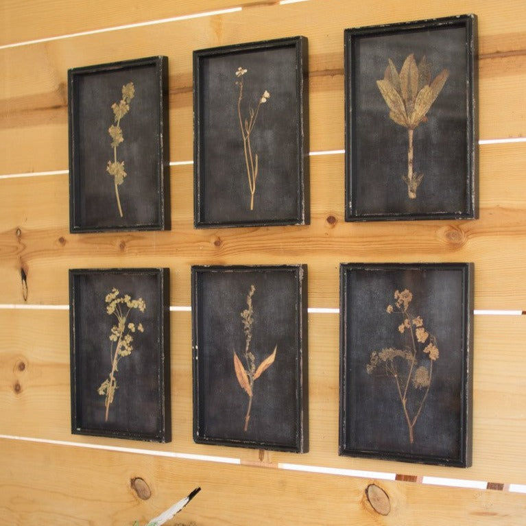 Set of 6 Botanical Prints Framed