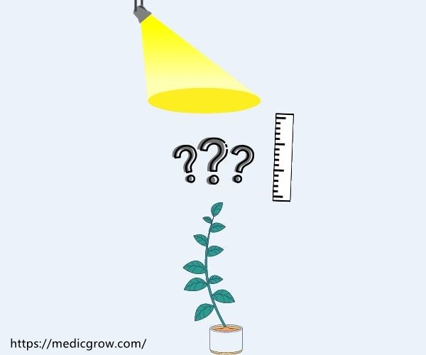 distance between light and plants