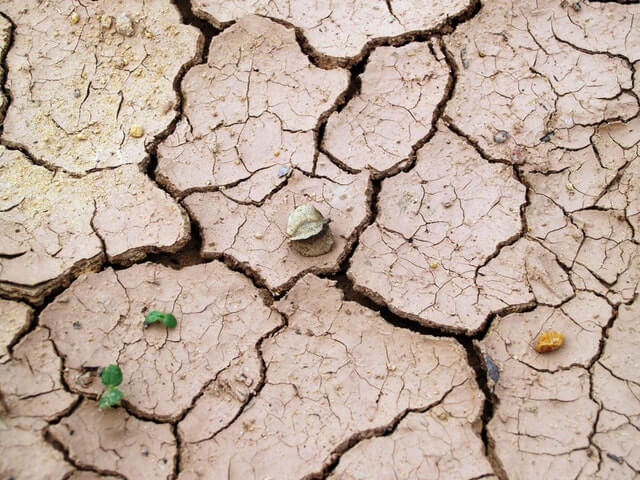 drought affecting crop yield