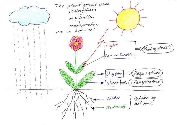 factors affecting plant grwoth