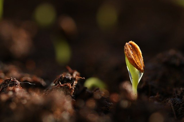 germination-for-plant-growth