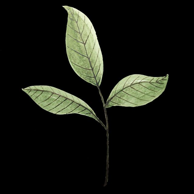 mother plant leaves width=