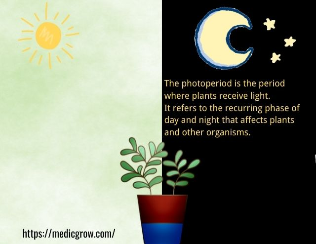 photoperiod for plant growth