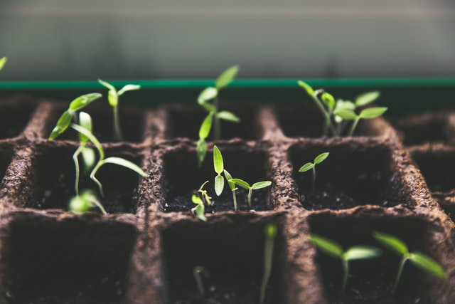 seedling-for-plant-growth