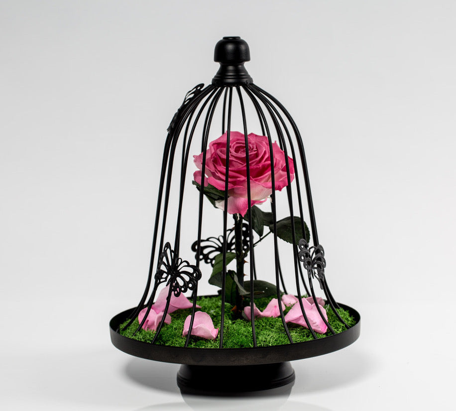 Eternity Rose Cage