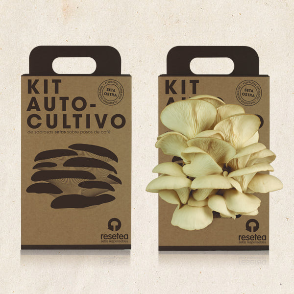 Kit Autocultivo Seta Ostra - Shop 987