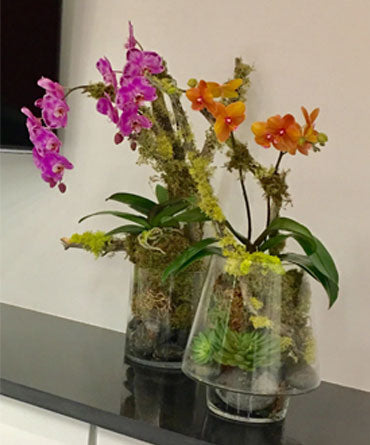 Orchids in Moss