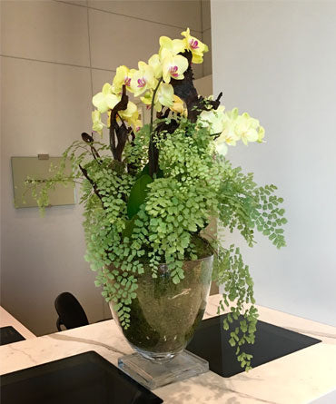 Orchids with Maidenhair Fern