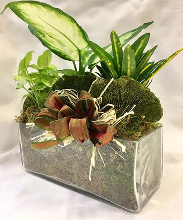 Mini Garden Planter Display
