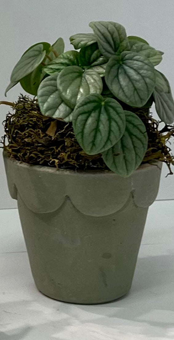 Mini Potted Plant