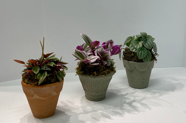 Mini Potted Plant Trio