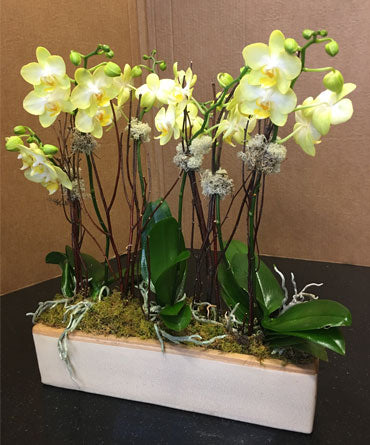 Orchids in Planter Deluxe
