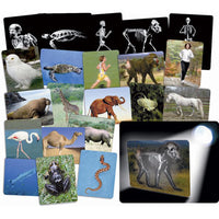 X-RAY CARDS, What is Inside Animals, Set of 16