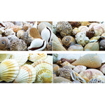 TREASURE BASKET PACKS, Shells, 2kg