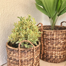 Load image into Gallery viewer, Dracaena Round Basket