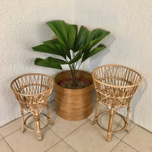 Natural Scarlet Star Plant Stand