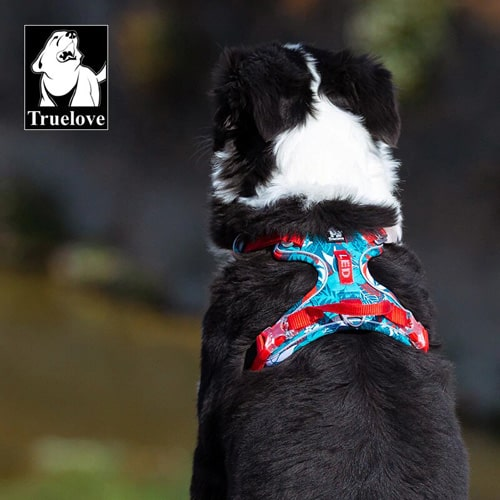 Harnais pour chien TRUE LOVE COUNTRY + EDITION SPECIALE