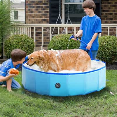 piscine pliable grand chien