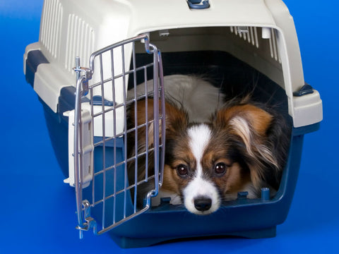 cage-transport-chien