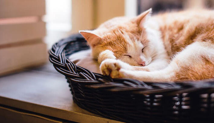 guide d'achat couchage pour chat