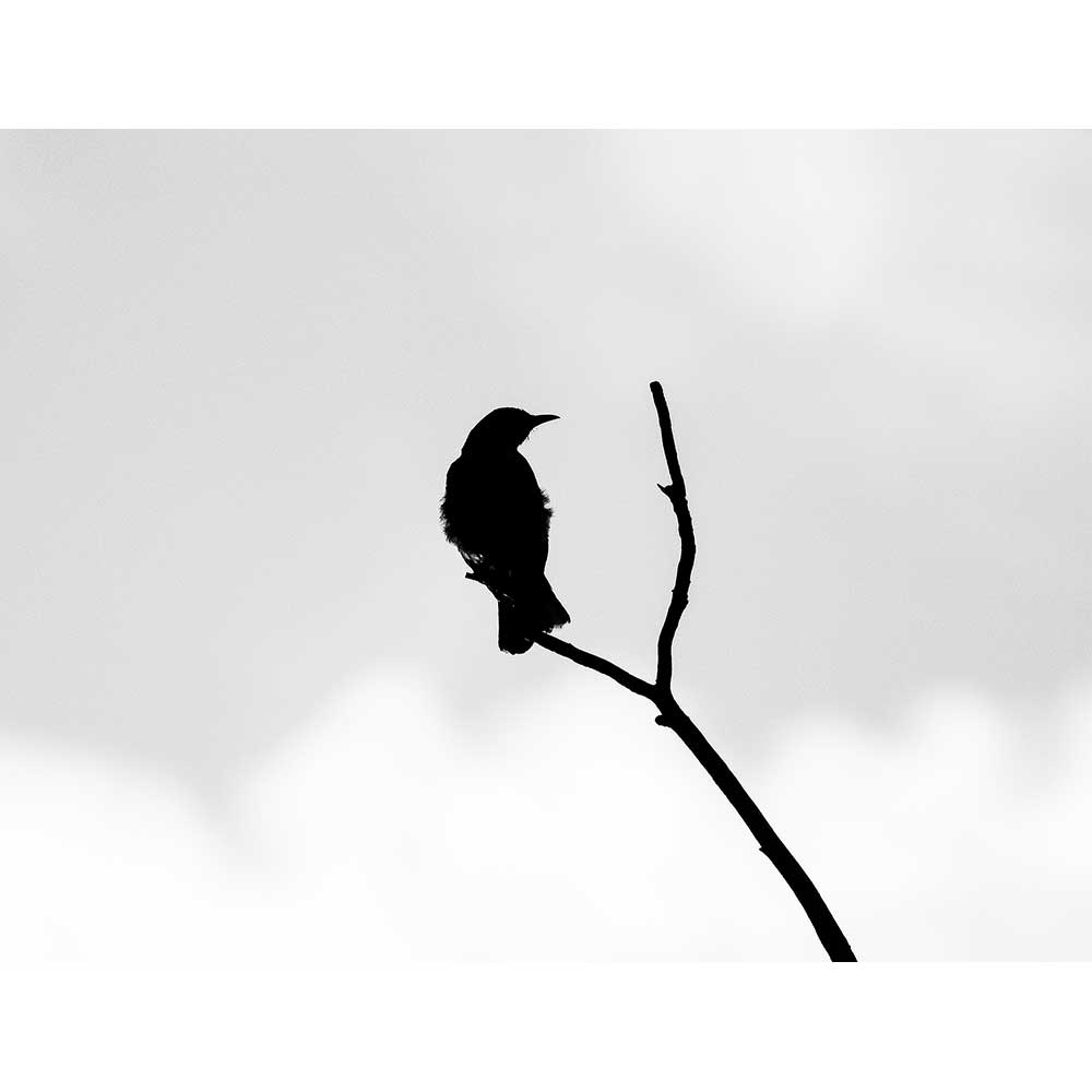 Bird and Branch by Alejandra Perez | APP10001