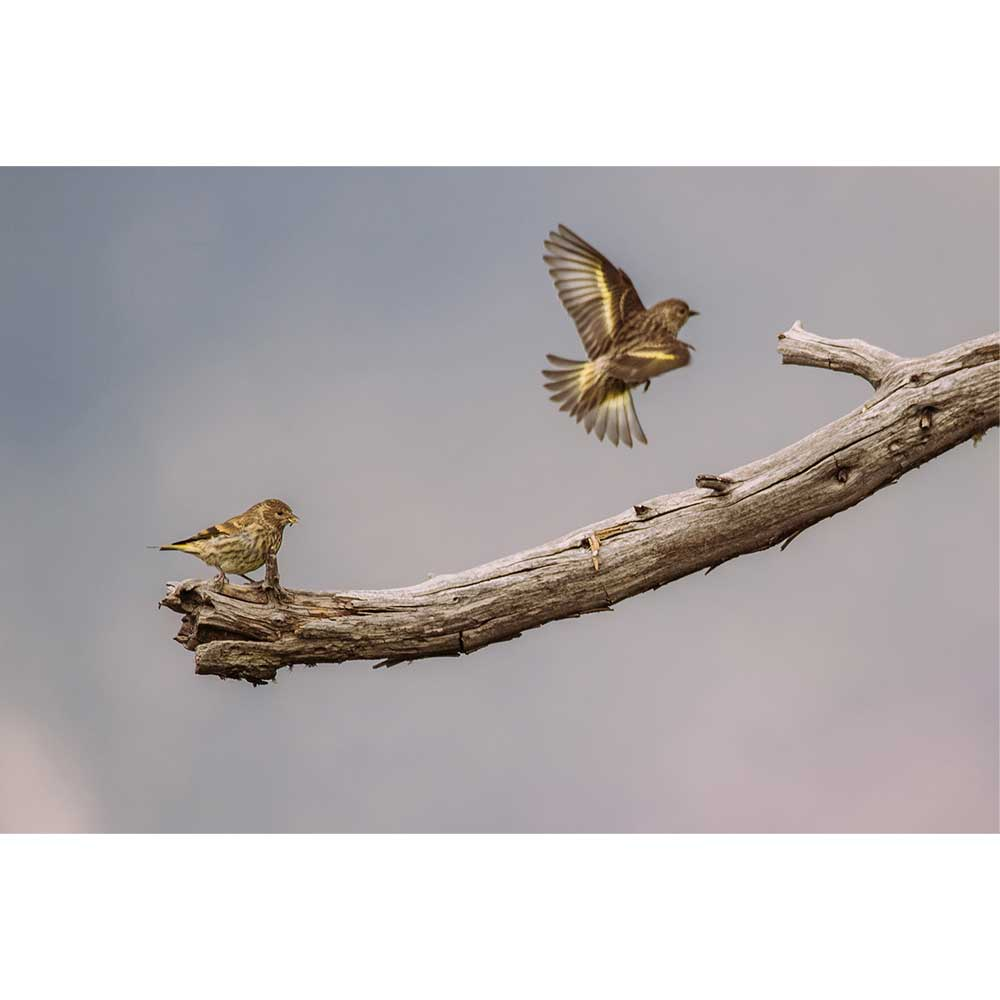 Branch Birds by Alejandra Perez | APP10003