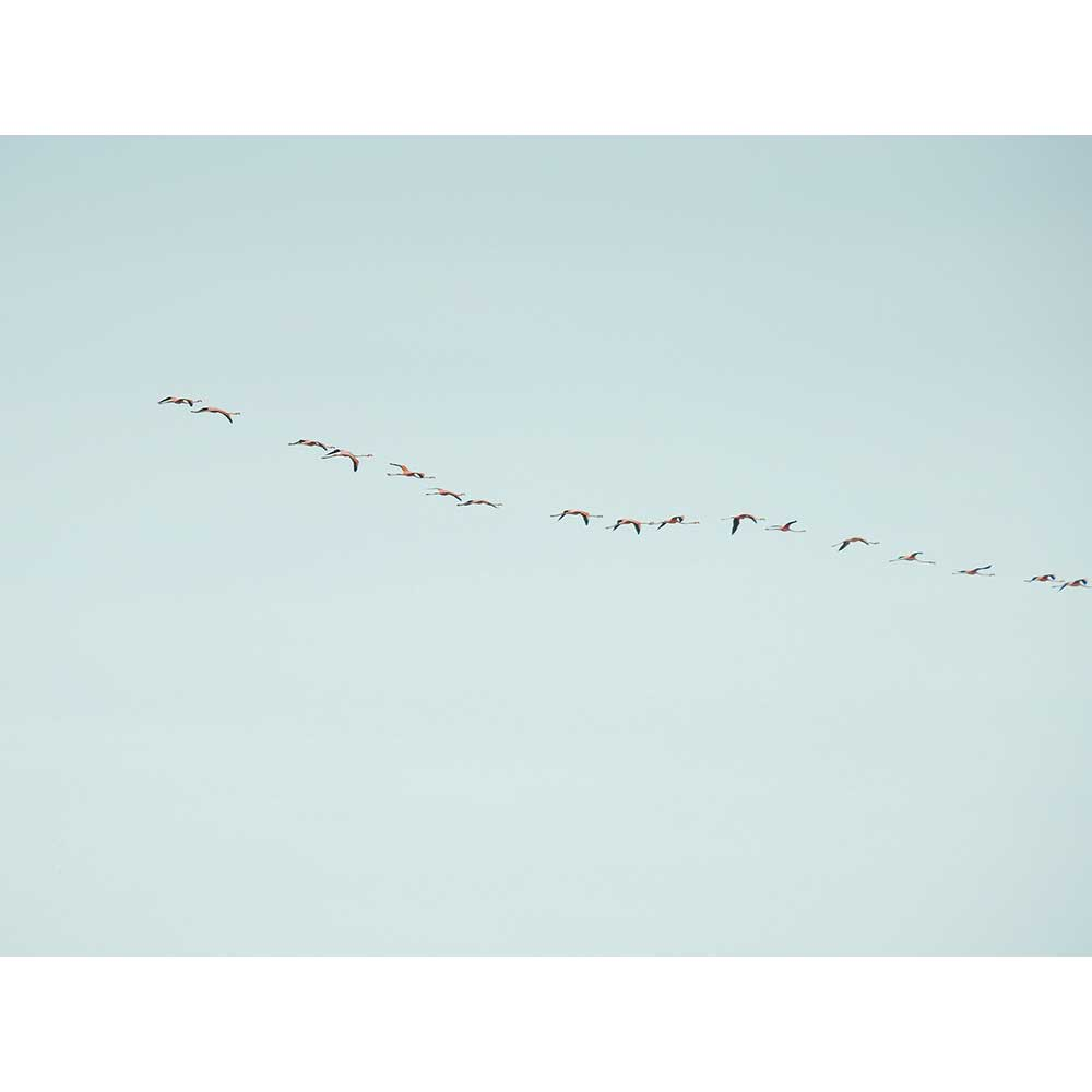 Flamingo Flight by Alejandra Perez | APP10005