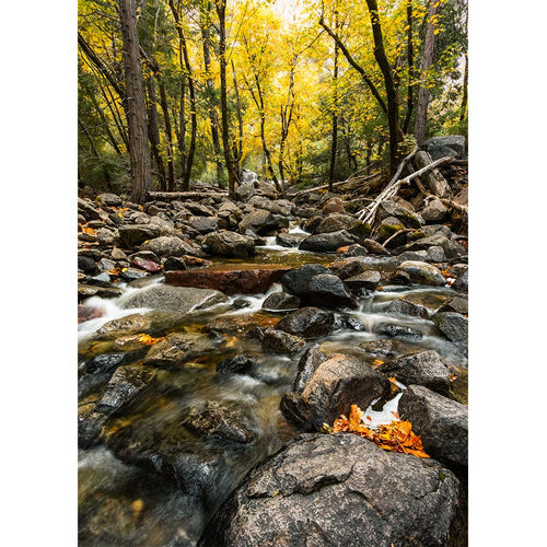 Autumn Stream by Tim Herschbach | TPH10002