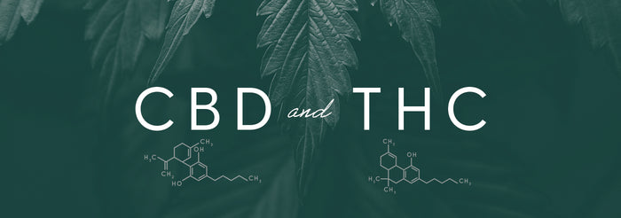CBD and THC: A Comparison