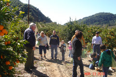 Tony discussing tangerines on an orchard tour