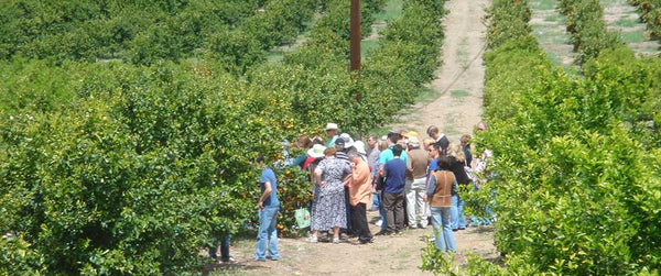 Folks on a tour of the Sheldon Orchard
