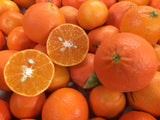 Spring Citrus CSA: 6 boxes of fruit from Jan to May