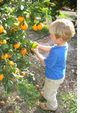 Liddle Ojai Pixie Tangerines
